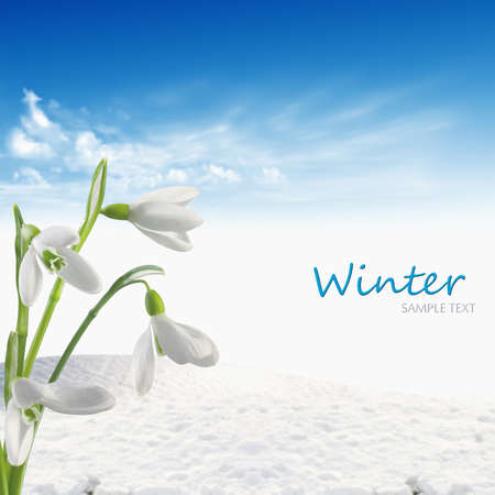winter background Stock Photo - 17212397