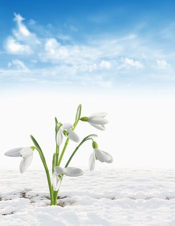 winter background Stock Photo - 17204152