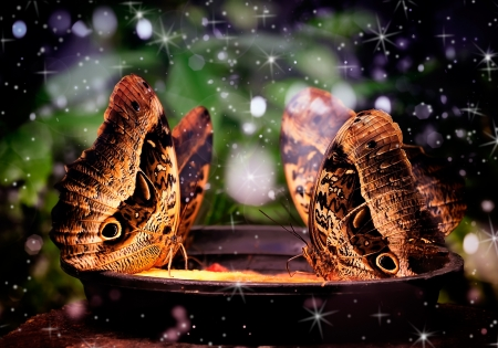 butterfly sitting on a tree trunk Stock Photo - 17717168
