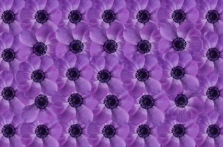 violet floral background Stock Photo - 18815216