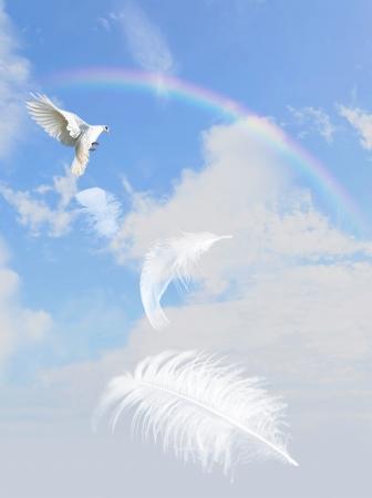 duif vliegen in de lucht