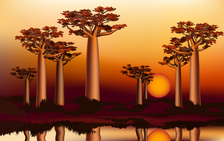 baobab: Sunset in the African baobab forest near the river Illustration