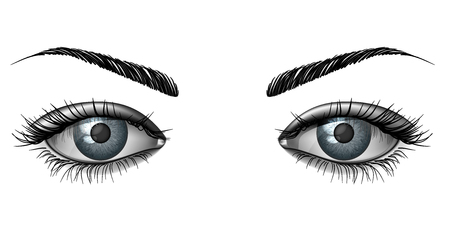 Realistic female eye close up, wide open glance with eyebrows Illustration
