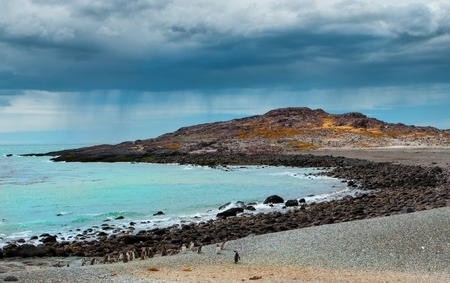 waddling: Penguin island in Patagonia, changeable south rainy weather, Argentina