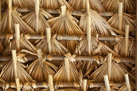 trussing: Primitive thatch of palm leaves in hot countries of South America