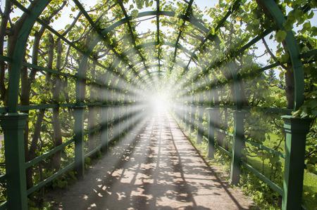 Helder licht aan het einde van groene tunnel, weg naar de hemel of verduidelijking