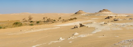 a panorama: Golden sand in Sahara desert in Egypt, dry and isolated landscape, big size panorama