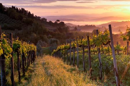 Vineyard landscape in Tuscany, Italy. Misty sunrise