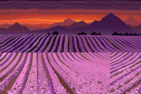 Lavender field at the dusk. Lines of flower bushes vector illustration