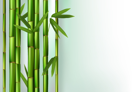 Green bamboo realistic vector illustration, good for background
