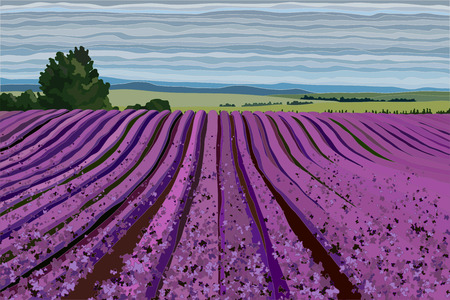 Bright lavender field with bushes, trees and blue sky vector illustration realistic landscape Illustration