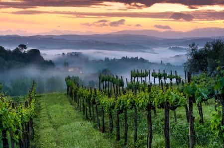 Vineyard landscape in Tuscany, Italy. Misty sunrise Reklamní fotografie - 121009850