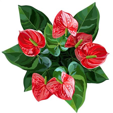 Anthurium rouge ou flamant rose fleurs vue de dessus illustration vectorielle