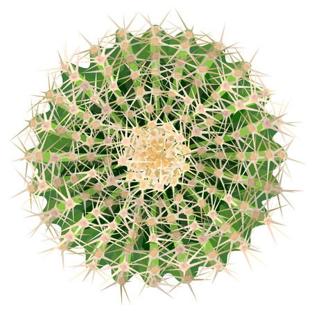Realistic vector illustration of big green cactus houseplant top view