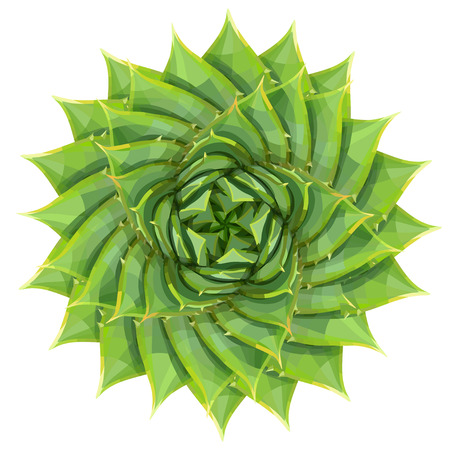Spiral aloe succulent houseplant or desert plant vector illustration, geometric green pattern flower