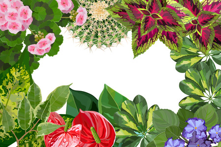 Various types of houseplant flowers background top view. Perfect for florist shop or gardening web site cover Çizim