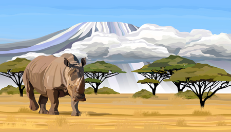 Big African rhino walking in savanna in Africa realistic vector illustration. Ideal for safari or wildlife park presentation.