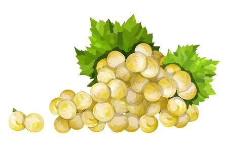 Ripe green grape. Green bunch with leaves vector illustration