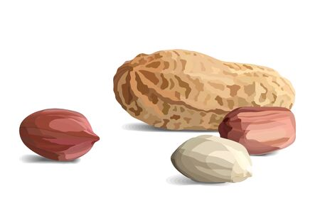 Peanuts in realistic style, organic snack close up vector illustration