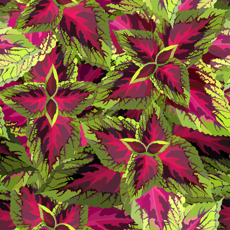 The burgundy with yellow coleus on white background, vector illustration of a houseplant seamless pattern
