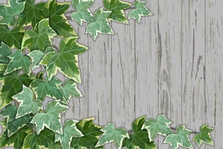 Old rustic wooden wall half covered by common ivy Иллюстрация