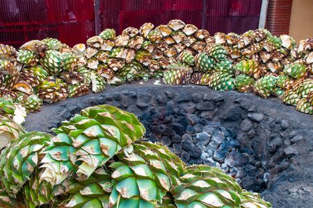 Baking blue agave hearts in ground oven pit, tequila factory Фото со стока