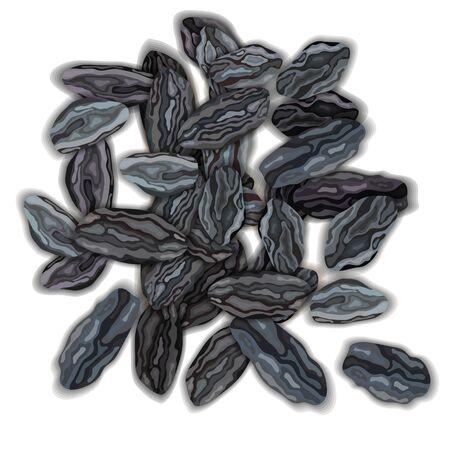 Dried dark raisins on a white background vector illustration 向量圖像