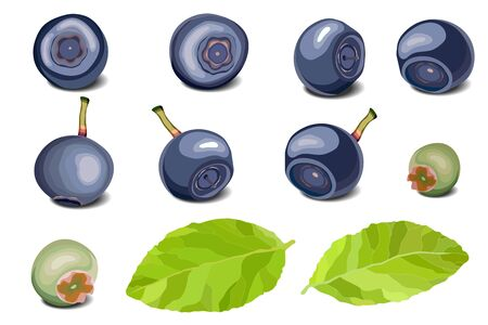 Blueberry set, leaves and berries on white background Ilustracja