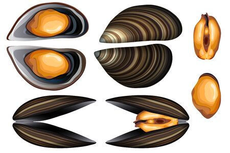 Fresh open and closed mussels vector set on white background