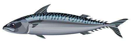 Mackerel fish on white background vector illustration 向量圖像