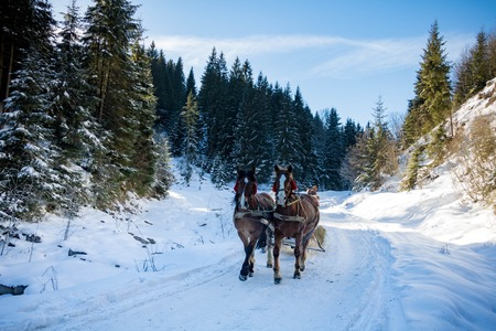 winter forest, horseback riding and sleigh, beautiful blue sky with clouds, sunny day, mountains and trees, trees in the snow