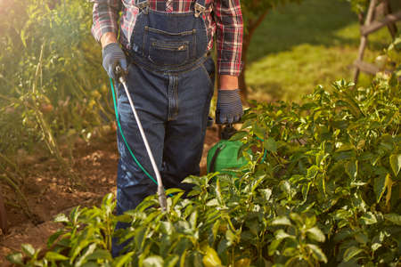 Responsible gardener spraying plants in his garden