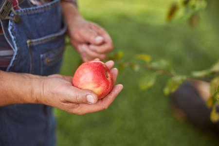 Fresh ripe red apple in hand of a gardener Archivio Fotografico