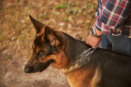 Brown dog walking on leash with his owner Archivio Fotografico