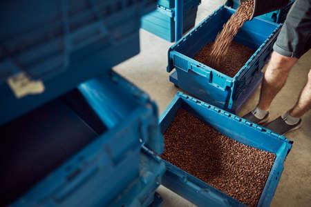 Male worker pouring coffee beans into plastic crate Archivio Fotografico