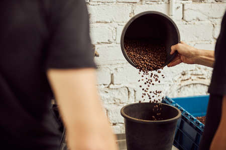 Young man pouring coffee beans into bucket