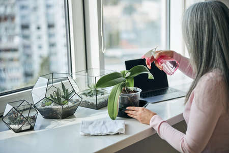 Woman spraying houseplant with water at home