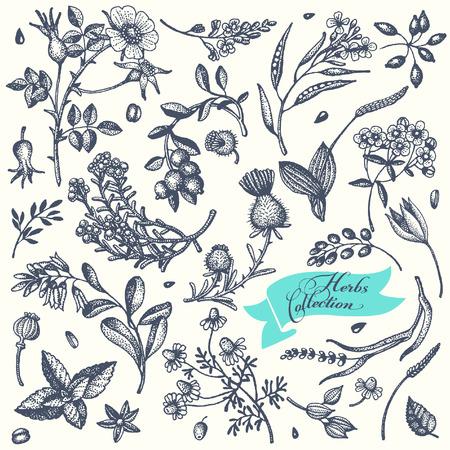 medicina: Conjunto de hierbas y flores dibujadas a mano. Vector.It se puede utilizar para el diseño de cosméticos, perfumes y medicinas. Vectores