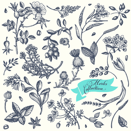 Set Hand gezeichnete Kräuter und Blumen. Vector.It können für die Gestaltung von Kosmetika, Parfums und Medikamenten verwendet werden. Standard-Bild - 42167264