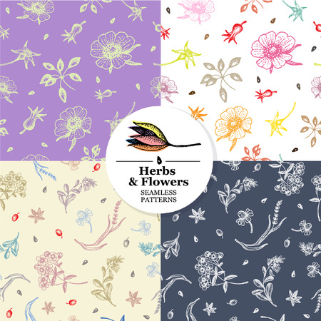 Set of seamless pattern with hand drawn herbs and flowers. Vector.  イラスト・ベクター素材