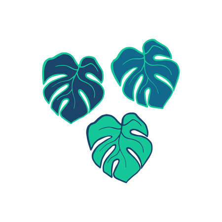Exotic plant leaves isolate on white background, tropical floral leaves hand drawn. Cartoon monstera leaves vector color illustration. Three leaf monstera design elements blue and green