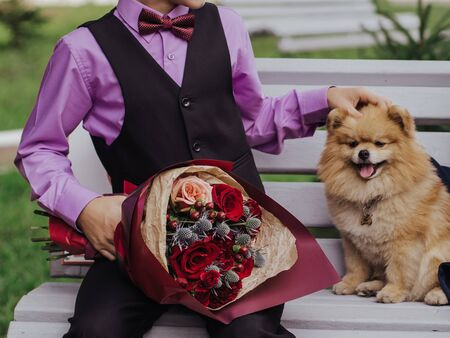 Boy in purple shirt with bow tie holding a festive red bouquet of flowers. Sitting on grey bench, little ginger pomeranian dog Banque d'images - 132112467