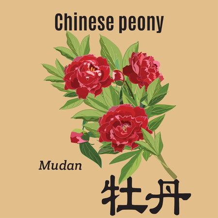 Vector illustration of chinese peonies. Mudan hieroglyphics in chinese. Flat style design element.
