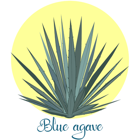 Tequila agave or blue agave vector illustration