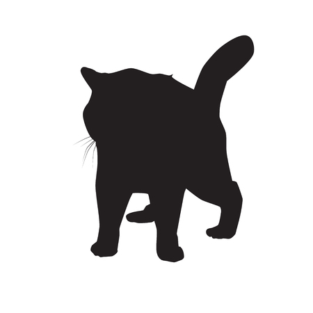 Cat black silhouette on white vector illustration