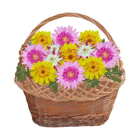 Wicker basket with chrysanthemum flowers, vector isolated illustration Ilustração