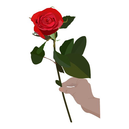 Blooming red rose in hand, vector flat isolated illustration. Beautiful flower for greeting card, invitation, poster, banner. Ilustração