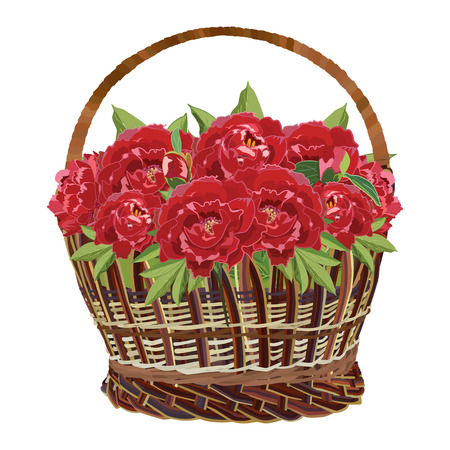 Wicker basket with red peony flowers. Vector flat illustration isolated on white background. Stock Illustratie