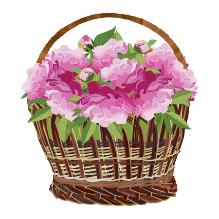 Wicker basket with pink peony flowers. Vector flat illustration isolated on white background.