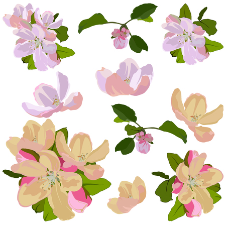 Apple tree blossom set, vector isolated illustration